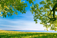 Ocean view from park framed by green trees and grass Royalty Free Stock Photo