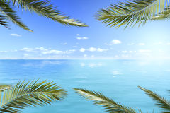 Ocean views with palm leaves Stock Images