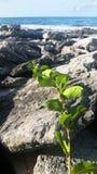 Ocean Vine. Sea ocean green orange unique grow vine plant stock photography