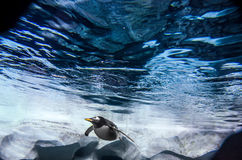 Ocean water with King Penguin swimming in the distance. Stock Photo