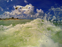 In the ocean waters gull flying by. Green ocean waters slapping around the camera as a sea gull flies by inbetween the waves Stock Photos
