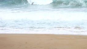 Ocean Waves. Breaking on a sandy beach stock video footage