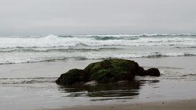 Ocean Waves And Rock On Beach Covered In Green Plant stock video