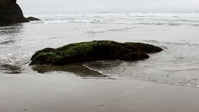 Ocean Waves And Rock On Beach Covered In Green Plant stock video footage