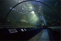 Ocean world, Sea world Aquarium near Edinburgh. Ocean World North Queensferry Fife Scotland aquarium and sealife centre underwater shark tunnel with visitors royalty free stock photos