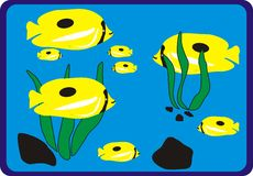 Ocean Yellow Fish Family. Is very interesting for many illustrations Royalty Free Stock Images
