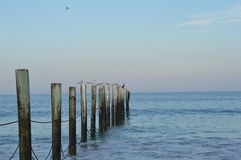 Ocean z ptakami na poczta Zdjęcie Stock