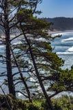 Ocean za sosnami zdjęcie royalty free