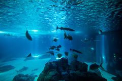 Oceanario de Lisbonne avec les poissons d'océan et le monde d'aqua, Portugal, l'Europe image libre de droits