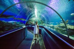 oceanarium的妇女在鳄鱼雀鳝鱼附近 免版税库存照片