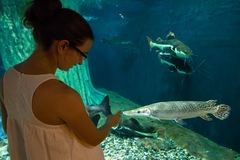 oceanarium的妇女在鳄鱼雀鳝鱼附近 库存图片