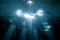 Oceanarium Imagenes de archivo