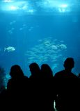 Oceanarium Royalty Free Stock Photography