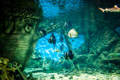 Oceanarium Stock Photo
