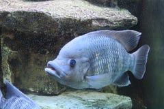 Oceanarium Foto de Stock Royalty Free