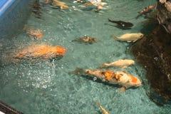 Oceanarium 免版税库存图片