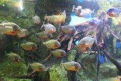 Oceanarium Imagens de Stock