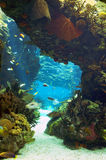 Oceanarium av Lissabon Royaltyfria Foton