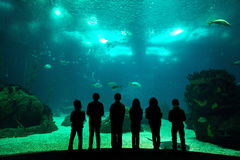 Oceanarium. Children in a water park looking at fish through the glass Stock Photos