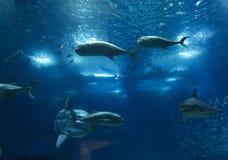 Oceanarium de Lisboa Imágenes de archivo libres de regalías