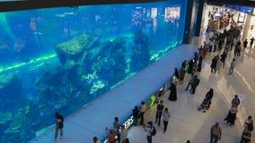 Oceanarium dentro de la alameda de Dubai almacen de metraje de vídeo