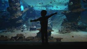 Oceanarium, donker cijfer van kindjongen die vissen in groot aquarium met mariene aard in duidelijk water overwegen stock footage