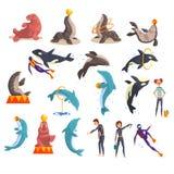Oceanarium eller delfinariumuppsättning, havsdjur och instruktörer som offentligt utför i delfinariumvektorillustration på a vektor illustrationer