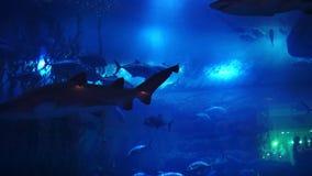 Oceanarium en la alameda de Dubai Dubai, UAE almacen de metraje de vídeo