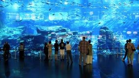 Oceanarium en onderwaterdierentuin binnen van de Wandelgalerij van Doubai, Verenigde Arabische Emiraten stock video