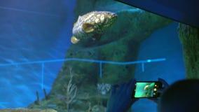 Oceanarium Handen van meisje, jongen die, mensen, toerist foto en video maken, die beelden op smartphone, mobiel gebruiken nemen stock footage