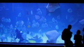 Oceanarium in Hurghada, Egypte Voedende vissen, stock video