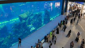 Oceanarium innerhalb Dubai-Malls stock video footage