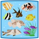 Oceanarium kolorowej rafy koralowa tropikalne rybie płaskie ikony Fotografia Royalty Free