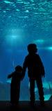 oceanarium lisbon Стоковое Изображение