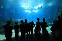 Oceanarium. Lisbon Oceanarium, one of the largest in the world. View from the principal main aquarium Royalty Free Stock Photography