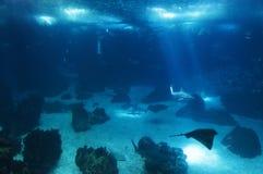 Oceanarium of Lisbon Stock Images