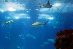 Oceanarium Stock Photos