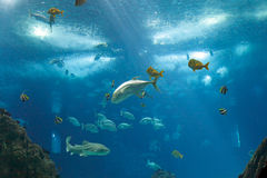 Oceanarium Royalty Free Stock Image