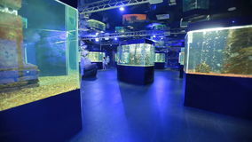 Oceanarium, a lot of aquariums stock video footage