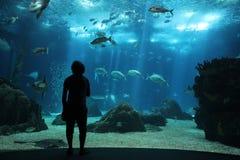 Oceanarium. A men standing in front of a big tank in oceanarium in Lisbon, Portugal Stock Photography