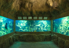 Oceanarium Royalty Free Stock Images
