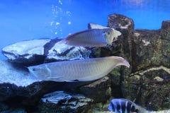 Oceanarium Royalty Free Stock Image