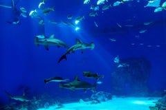Oceanarium sealife des großen Umfangs mit vielen Spezies Underwater a Stockfoto