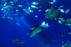 Oceanarium sealife des großen Umfangs mit vielen Spezies Underwater a Stockbilder