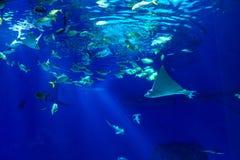 Oceanarium sealife des großen Umfangs mit vielen Spezies Underwater a Lizenzfreie Stockfotografie
