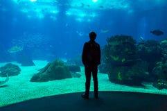Oceanarium Royalty Free Stock Photos