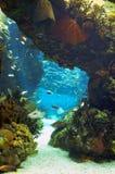 Oceanarium van Lissabon Royalty-vrije Stock Foto's