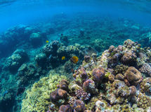 Oceanic biosphere. Tropical fishes in wild nature. Blue sea water wildlife. Stock Photo