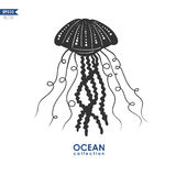 Oceanic jelly fish  on white Royalty Free Stock Photos