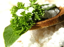 Oceanic salt with bay and parsley leaf Stock Image